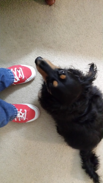 Mick approves of my shoes.
