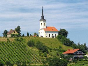 Vineyards near Maribor, photo from hiking-biking.net