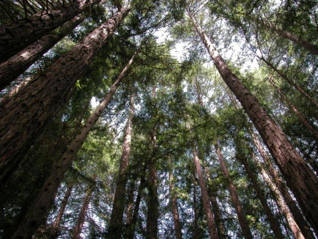 The only time I want to admire the Redwood forest is if I stick my head out the car window on my way to a winery.