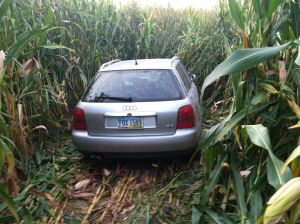 Yeah, I know that's a corn field, but that's kind of how it looked. I was driving and I was traumatized. Sue laughed.