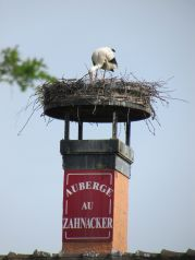 A stork! We loved them!
